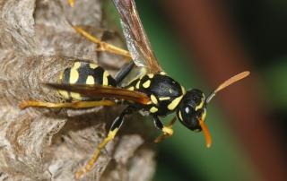 Hornets Pest Solutions