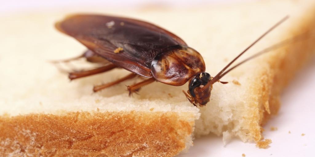 Roaches Pest Control Solution