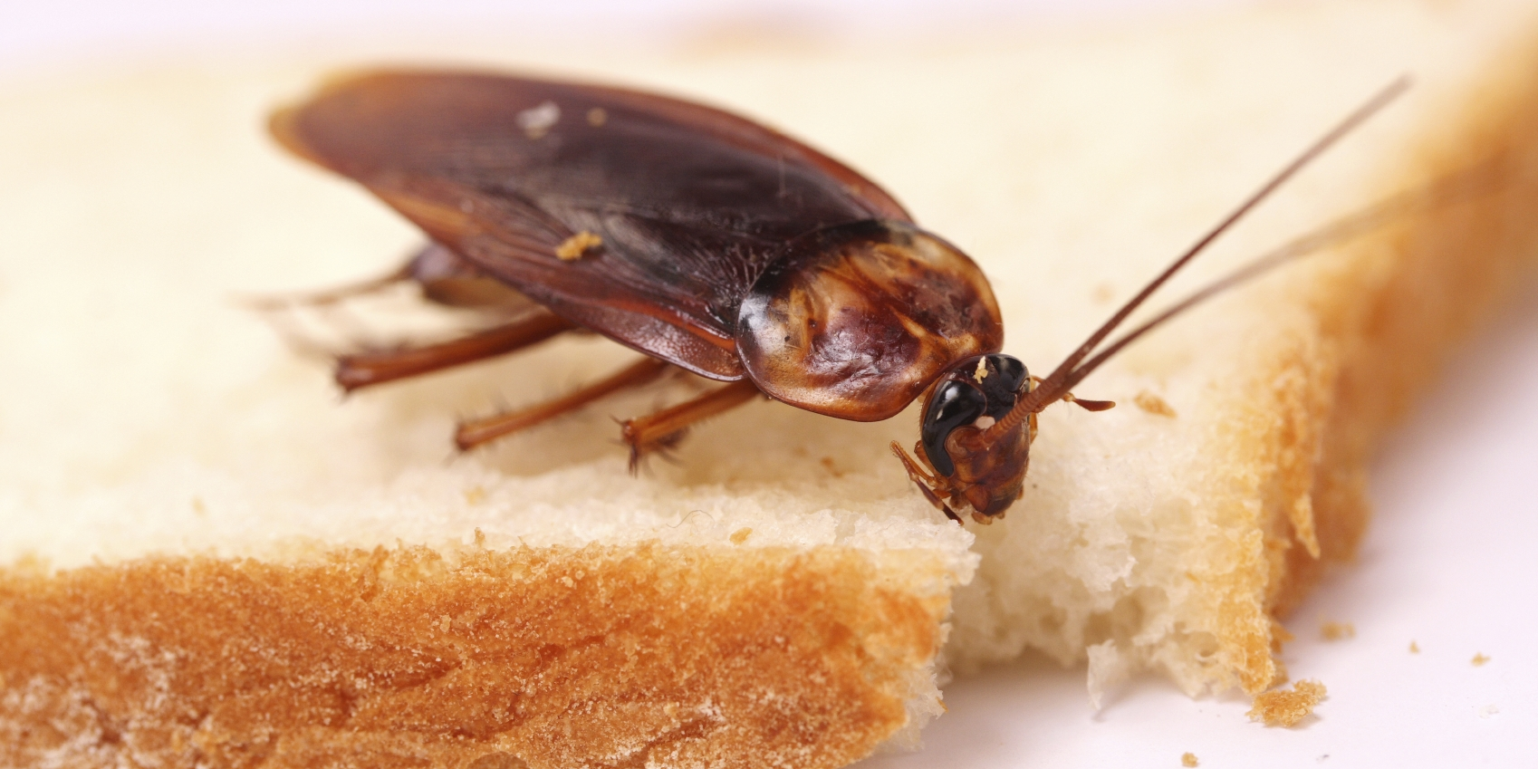 Roach In Food Restaurant