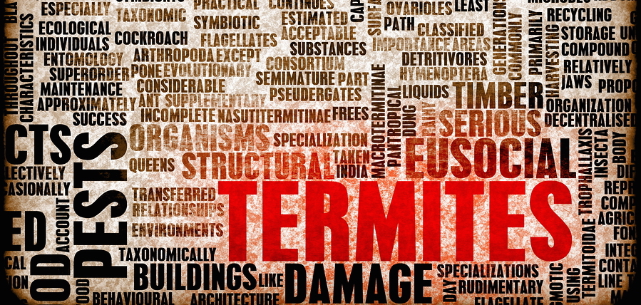 Spring Swarmers: How to Prepare for Termite Season